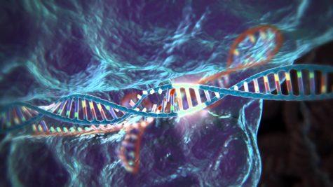 UK Grants Permission To Modify Embryos