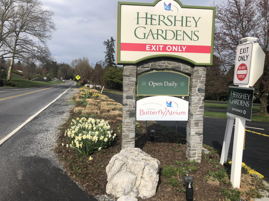 Light+yellow+tulips+beside+the+exit+of+the+Hershey+Gardens+on+Sunday%2C+April+14%2C+2019.+The+garden+opened+in+1937+and+is+filled+with+a+ton+of+newly+bloomed+flower+arrangements.+%28Broadcaster%2F+Ashlyn+Weidman%29