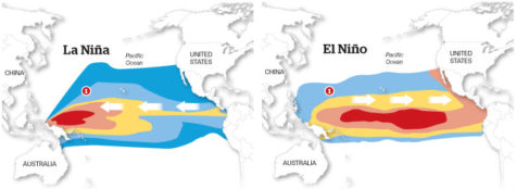 During La Niña, winds from the east push warm surface waters to the western Pacific. However during El Niño, winds weaken and warm surface water flows back to the eastern Pacific. Source: Tampa Bay Times