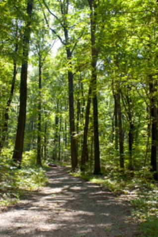 Top 4 Hiking Trails