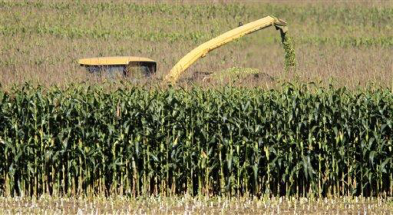 A harvester chops rows of corn, filling a truckload in Topsham, Maine, on Wednesday, Sept. 15, 2010. In 2013, 40% of corn production in the United States went towards the refinement of ethanol. (AP Photo/Pat Wellenbach)