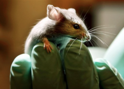 Editorial: End animal testing