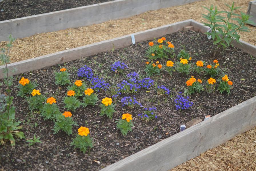 Photo Essay: HHS Garden in Bloom