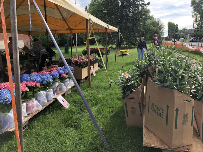 Boxes+of+flowers+sit+at+the+flower+sale+on+May+11%2C+2019.+Many+were+sold+for+twenty+dollars+a+box.+%28Broadcaster%2FMaeve+Reiter%29%0A